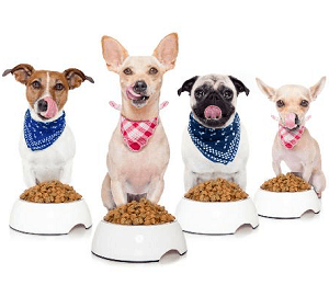 Kŕmenie psíkov