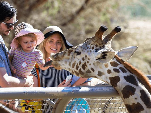 Rodinka kŕmi žirafu v ZOO